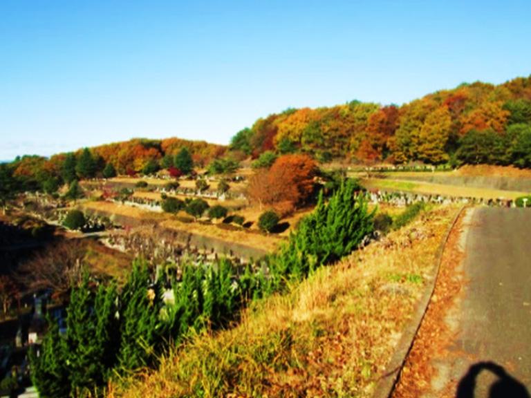 秋にはコナラなどが紅葉します