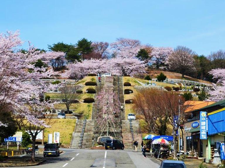 満開の桜は見物です